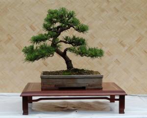 Bonsai Jubiläumsausstellung