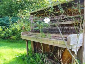 Disteln, Ranken, Hängematte. Gärten im Blick der Linse