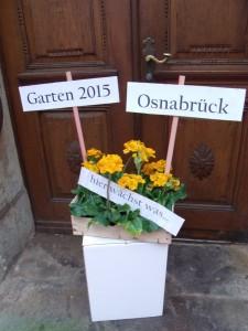 Pflanzen dekorativ in Szene setzen  mit der Stadtbibliothek Osnabrück