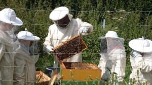 Bienenexkursion – von Nesterbau, Nektarraub und Pollenhöschen