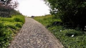 Osnabrücker Gartentraumtour – per Rad die florale Vielfalt erleben