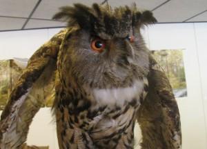 Wölfe, Eulen, Spinnen – Naturschutzwoche im Museum am Schölerberg